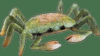 crab krabbe crabe summer ete beach plage  strand   tube sommer  meer mer sea deco