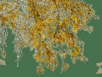 yellow tree branc, sunshine3