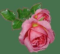 kukka fleur flower ruusu rose