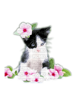Kaz_Creations Cats Cat Kittens Kitten Flowers