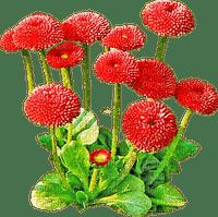 Kaz_Creations Deco Flowers Garden Grass