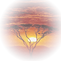 africa tree sunset