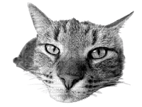 cat fun animal chat