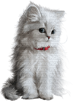 white cat chat blanc