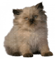 Cat , chat , katze