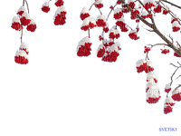 Winter Beeren