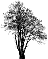 arbre Silhouette tree black tube baum