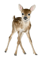 cerf fawn autumn reh deer herbst automne   animal    spring   tube