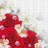 rose rouge fond roses pearls deco bg