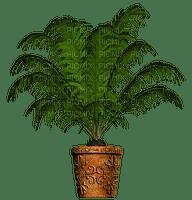 Pot.Deco.Plants.palm tree.plante.Victoriabea