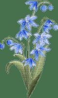 Fleur bleue fleurs bleues nature Debutante blue flower