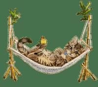 cat chat katze beach plage strand fun  summer ete  tube  sommer animal hammock hamac