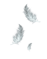 white feather plume blanc