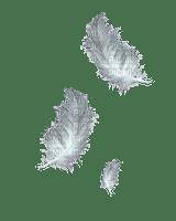 white feather plume blanc