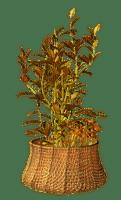 autumn the plant flower_automne plante