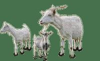 cabras  by estrellacristal