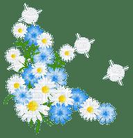 Coin fleurs marguerites fleurs blanches fleurs bleues nature Debutante blue flower white flower daisy