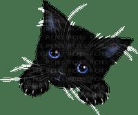 cat chat katze animal  black halloween      tube