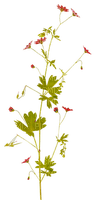 soave deco flowers red green