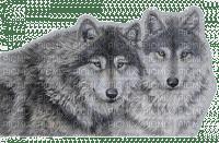 wolves -Nitsa 2