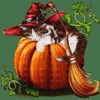 pumpkin citrouille kürbis   autumn automne herbst tube   deco  garden halloween cat chat katze animal