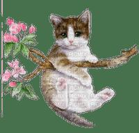 cat chat katze animal