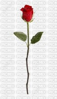 Une rose (stamp clem27)