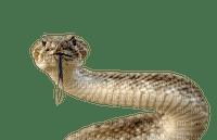 snakes bp