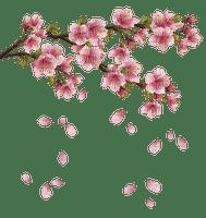 spring flowering branch printemps branche fleur