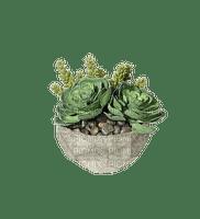 cactus, plant vase pot. sunshine3