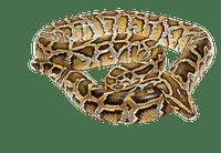 käärme, snake