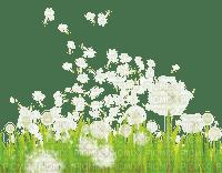 dandelion grass spring