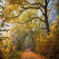 forest bg autumn automne forêt  fond