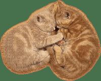 cat chat katze animal tube deco sweet