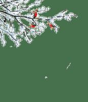 branch zweige winter hiver snow neige