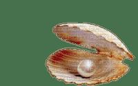 pearl shell bp
