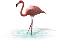 Kaz_Creations Birds Bird Flamingo