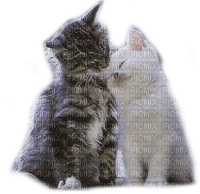 cats in love chats amour 🤍😺