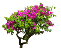 luonto, nature, puu, tree
