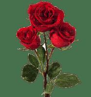 Trandafir 28