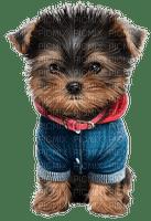 cute dog petit chiot