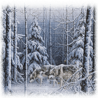 loup hiver paysage winter wolf