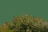plants bp