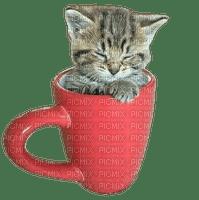 cat chat katze animal animals cup tasse sweet fun tube
