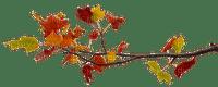 autumn branch automne branche deco