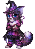 WITCH CAT halloween chat sorciere