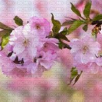 Background Sakura Spring