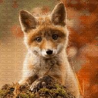 renard  fond baby fox transparent bg