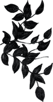 Branche.branch.Black.Noir.Victoriabea