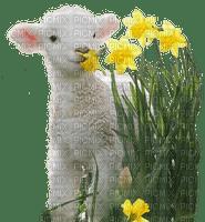 EASTER LAMB pâques agneau🐑🐑